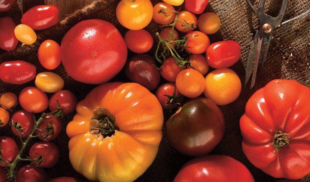 Meilleures tomates à cultiver au jardin selon vos goûts