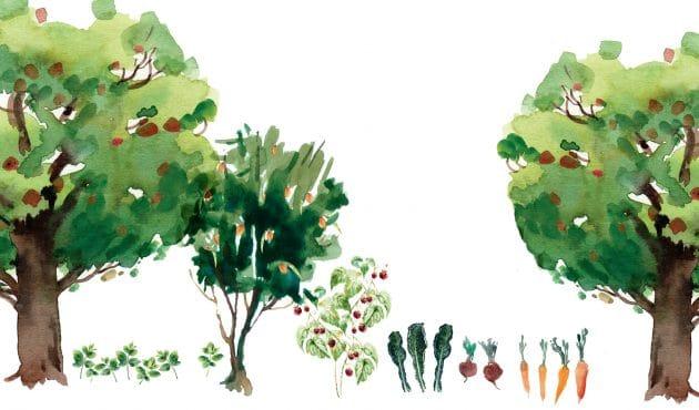 Une Foret Nourriciere Chez Soi C Est Possible Du Jardin Dans Ma Vie