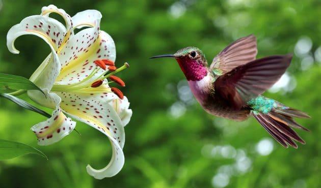 Tout savoir sur la pollinisation
