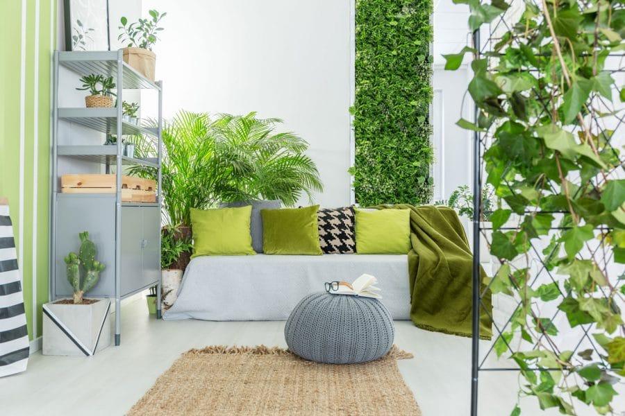 Mur de plantes grimpantess