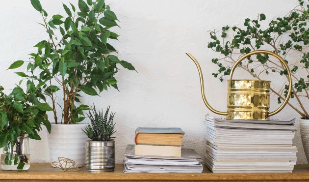 Des pots et des plantes : cet hiver, optez pour le vert