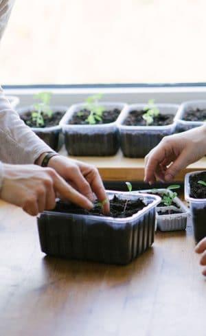 Comment préparer ses semis de légumes à l'intérieur