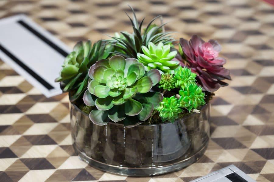 Arrangement de plantes succulentes