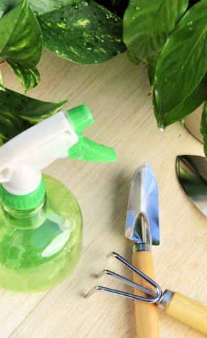 Tout sur la fertilisation des plantes d'intérieur