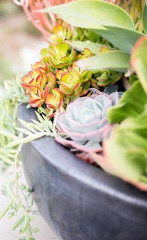 3 arrangements de plantes en pot qui résistent à la sécheresse