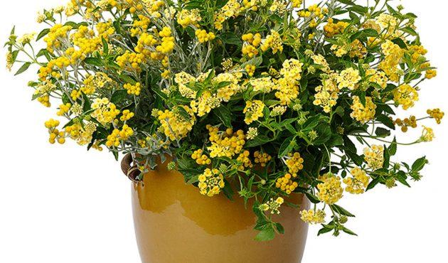 8 plantes annuelles tendance pour un jardin ensoleillé