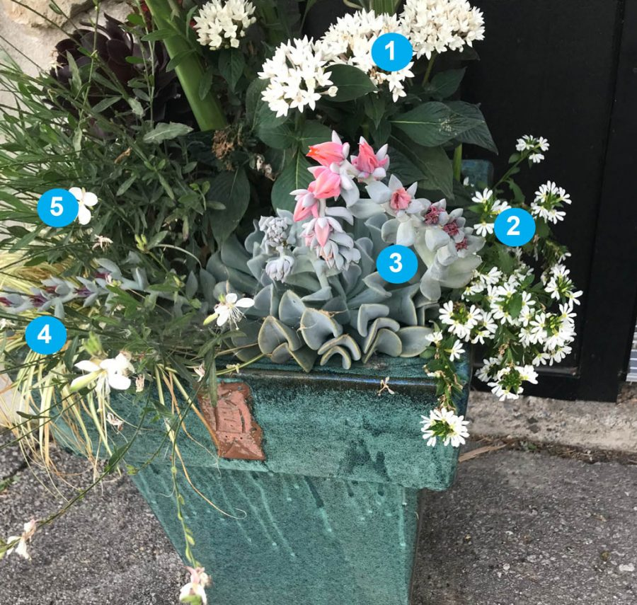 Plantes resistantes secheresse