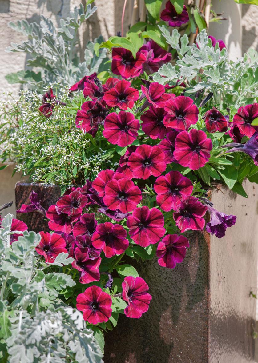 Pots de fleurs tendance