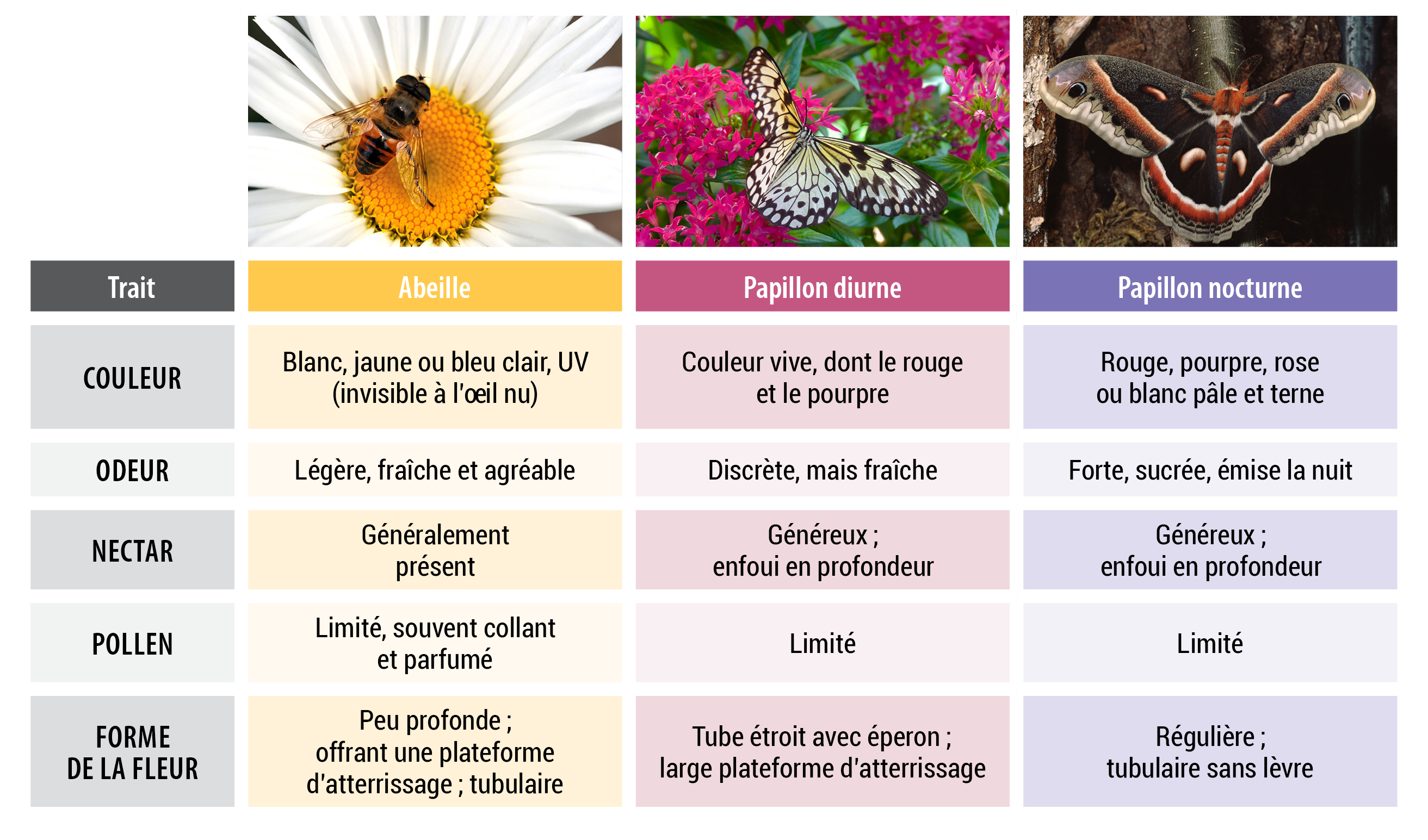 Un jardin pour attirer les pollinisateurs