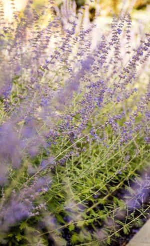 Tendances végétales 2019 à adopter au jardin