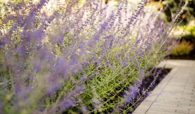 Tendances plantes jardin