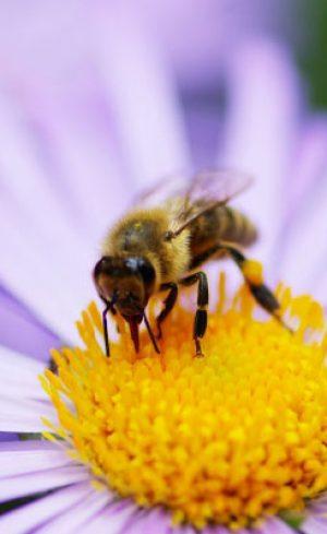 Comment attirer les différents pollinisateurs au jardin