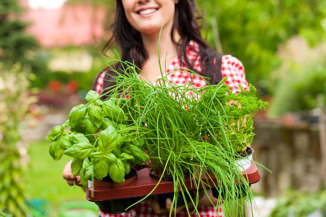 Top 10 des fines herbes