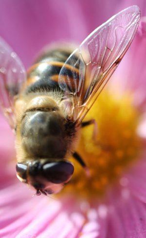 Planter des fleurs pour sauver les abeilles