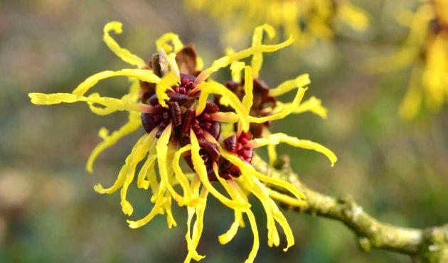 5 plus belles fleurs à floraison automnale