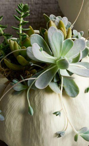 Bricolage d'automne à faire soi-même avec des plantes succulentes
