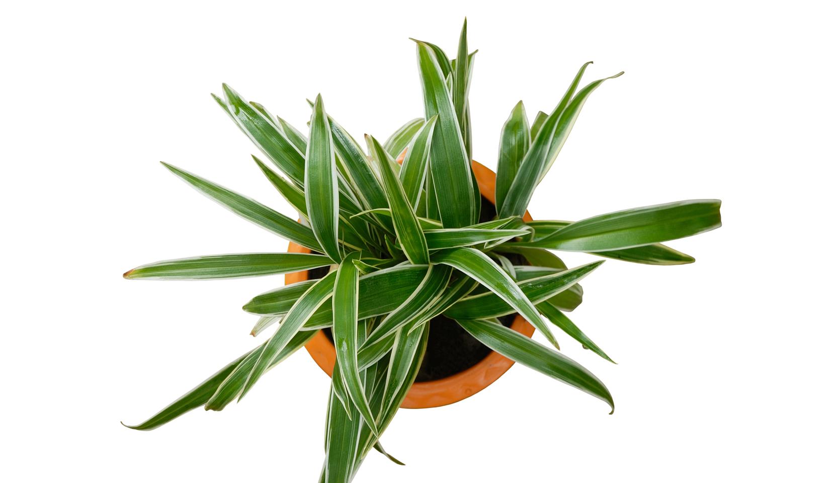 plantes d'intérieur indestructibles