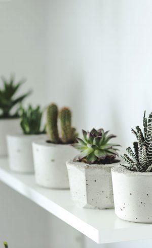 4 plantes d'intérieur indestructibles à intégrer à votre décor
