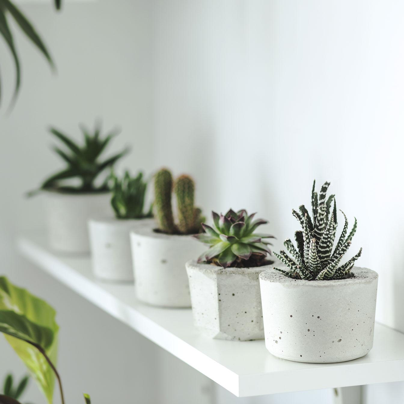 4 plantes d'intérieur indestructibles