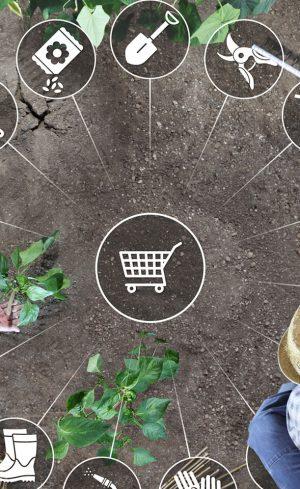 Jardiner en ligne : où acheter ses produits sur Internet