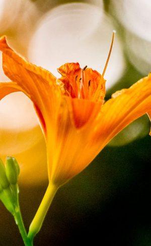 Tout savoir sur l'hémérocalle : variétés, plantation, taille et entretien