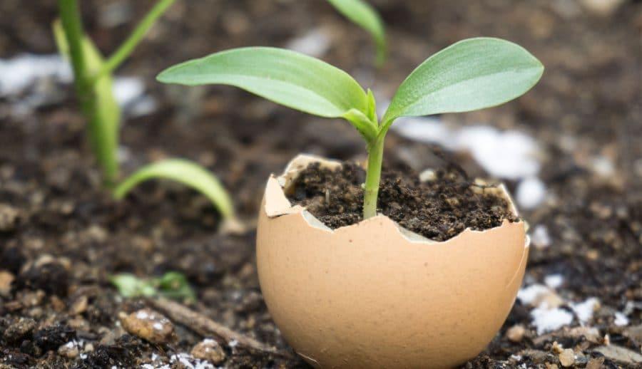 Planter ses semis au jardin