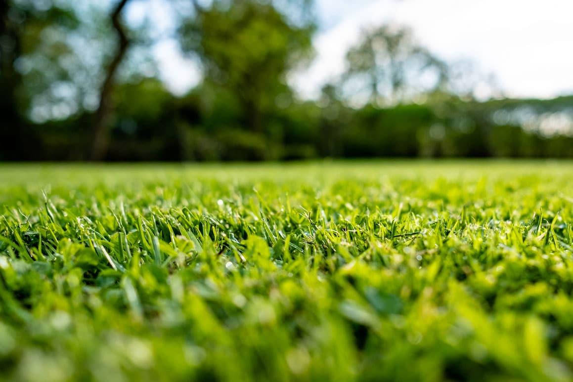 Belle pelouse fertilisation