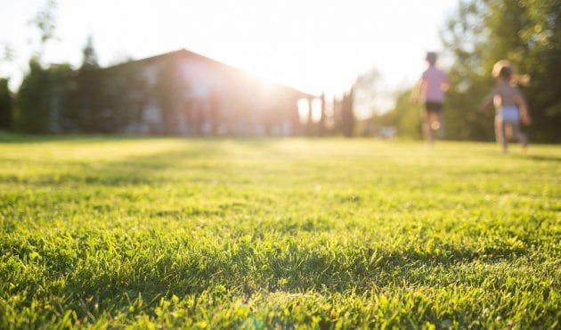 Entretien printanier de la pelouse