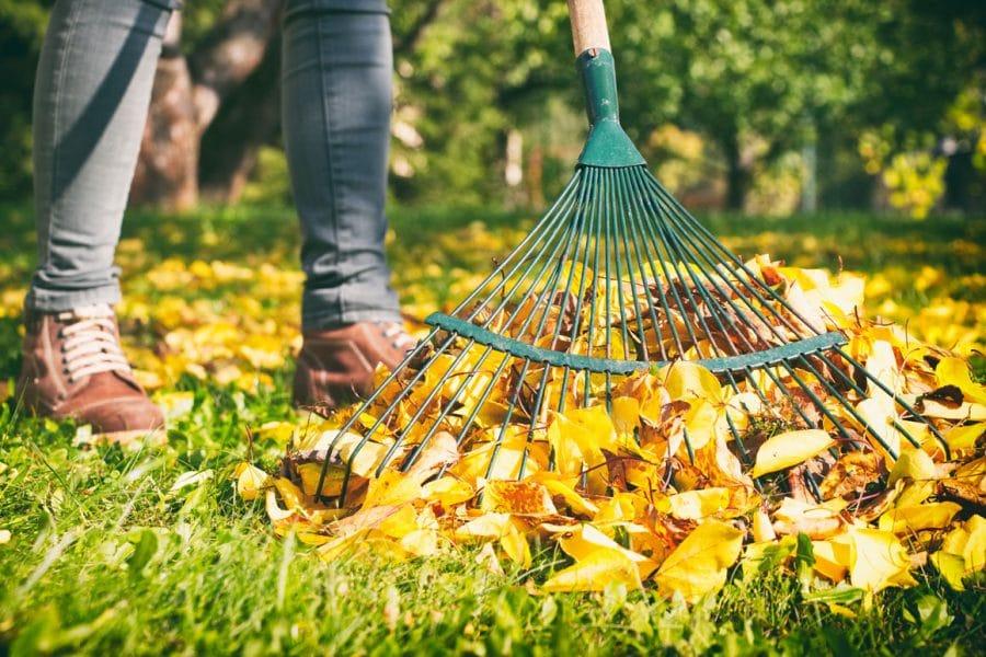 Nettoyer et rateler la pelouse