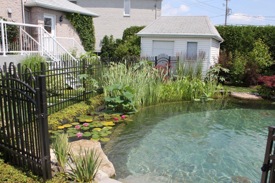 Une piscine naturelle a la maison