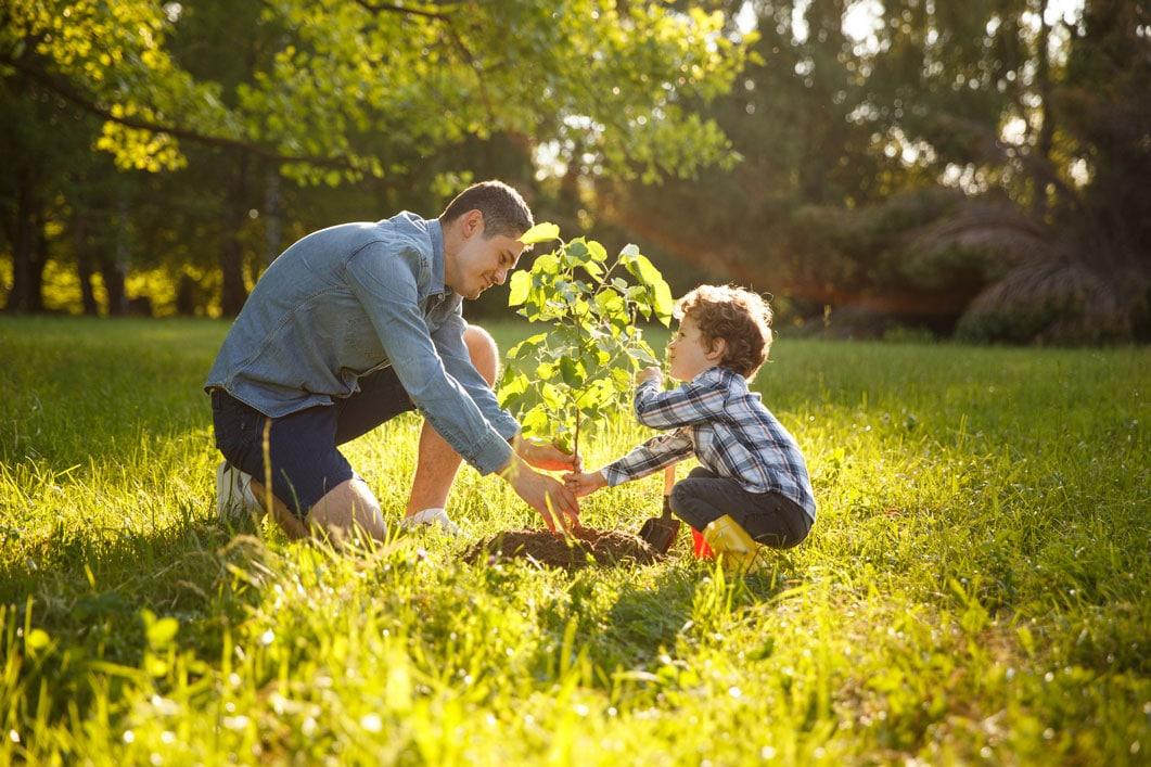 Transplanter un arbre