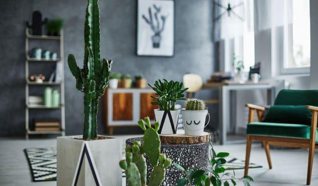 Les meilleurs cactus pour mettre du piquant dans votre déco