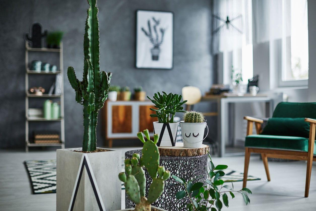 Décorer avec des cactus