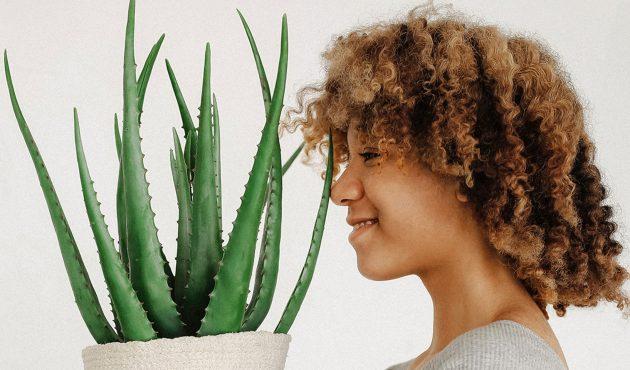 Combattre la dépression saisonnière grâce aux plantes