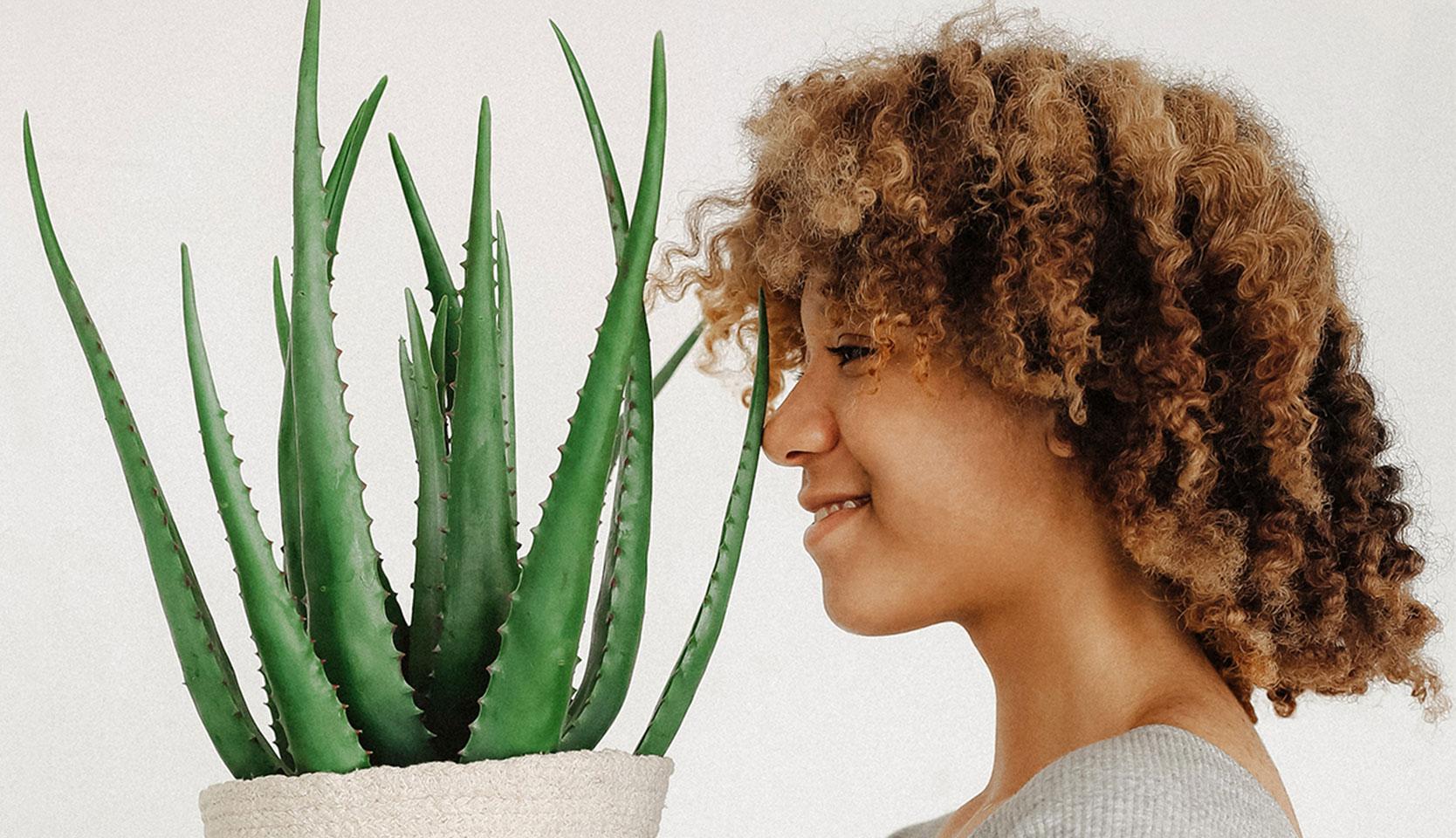 Combattre la depression saisonniere avec les plantes