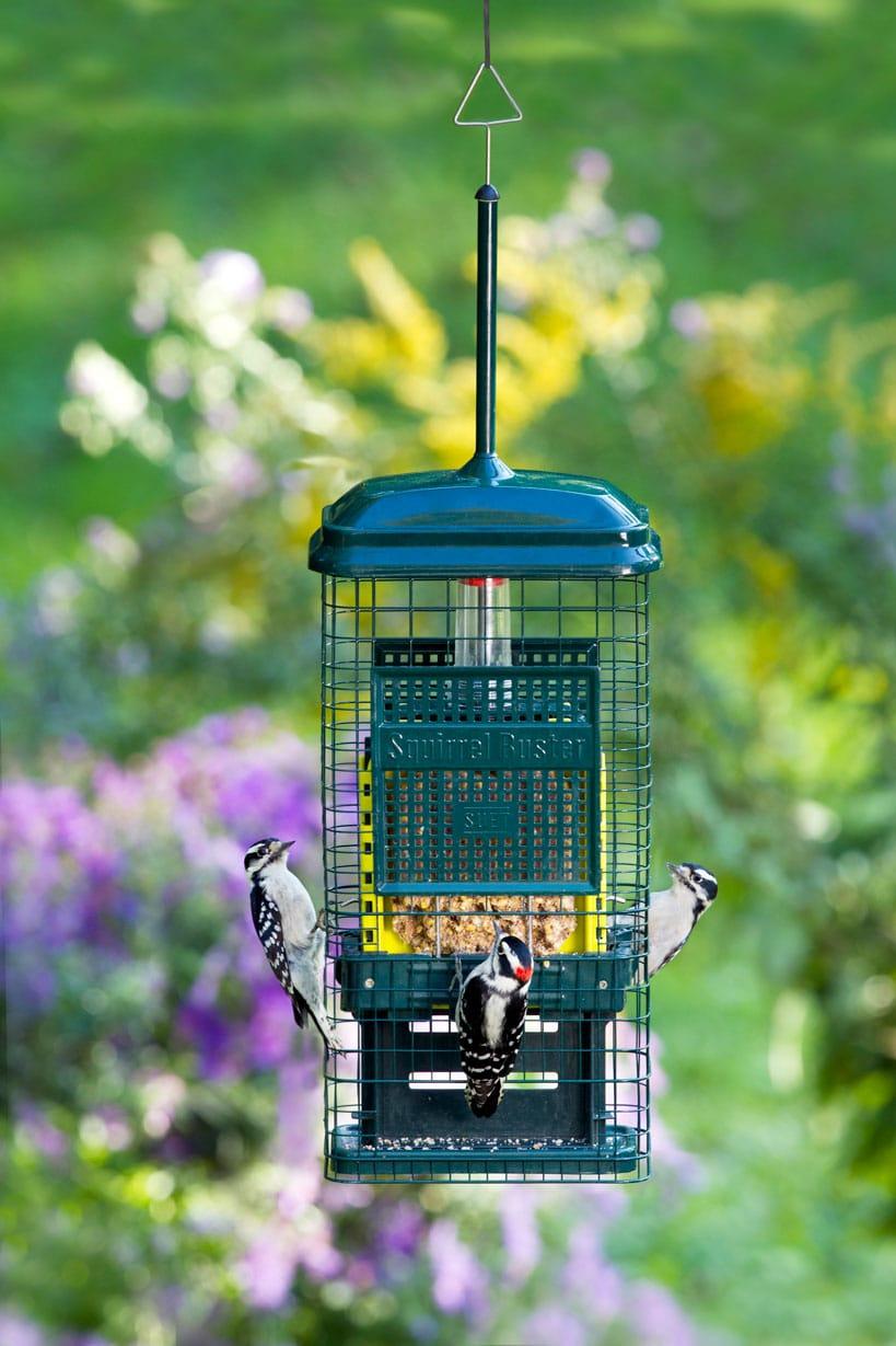 Mangeoire pour oiseaux Brome Bird Care