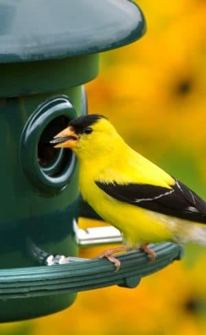 Inviter les oiseaux au jardin