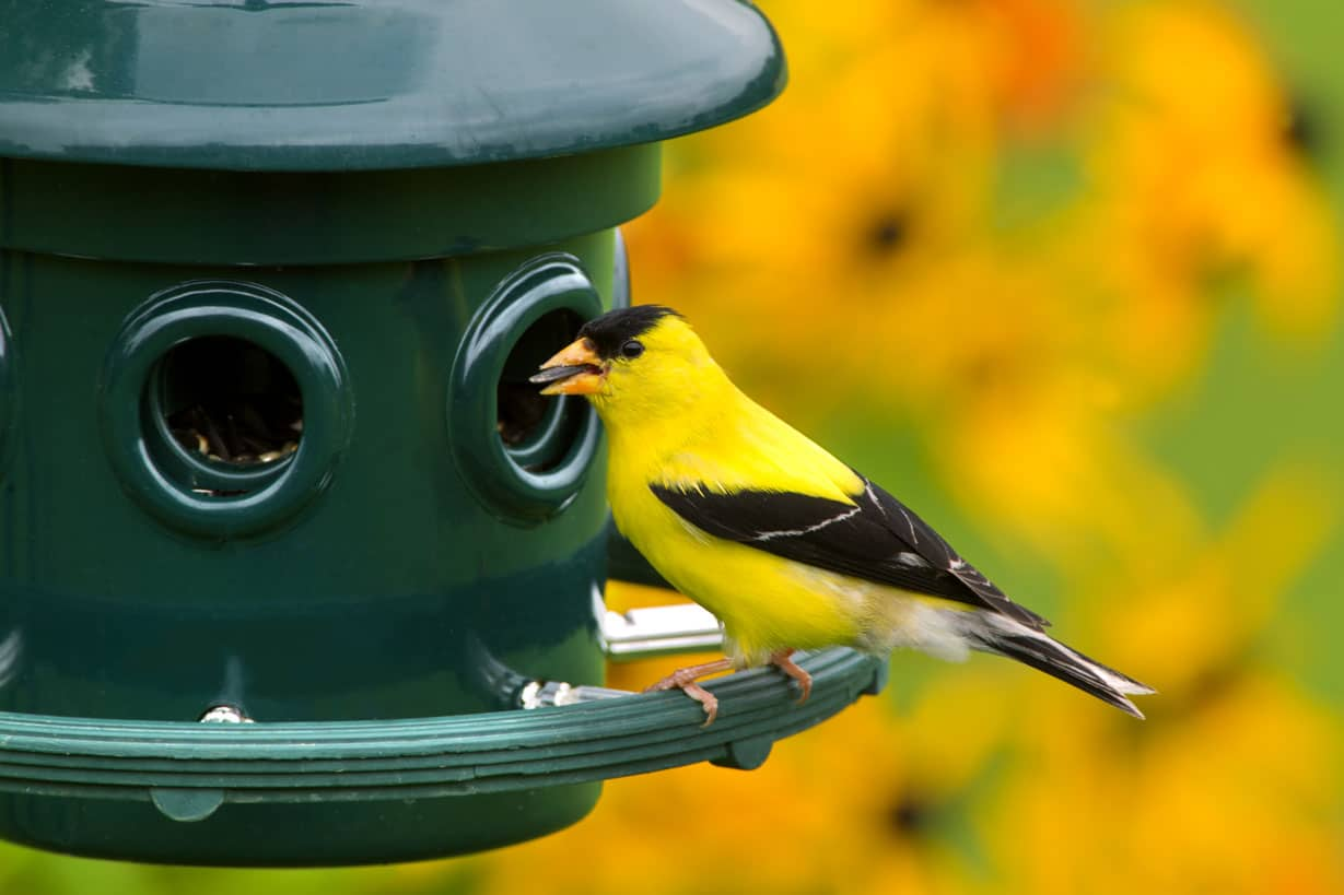 inviter les oiseaux