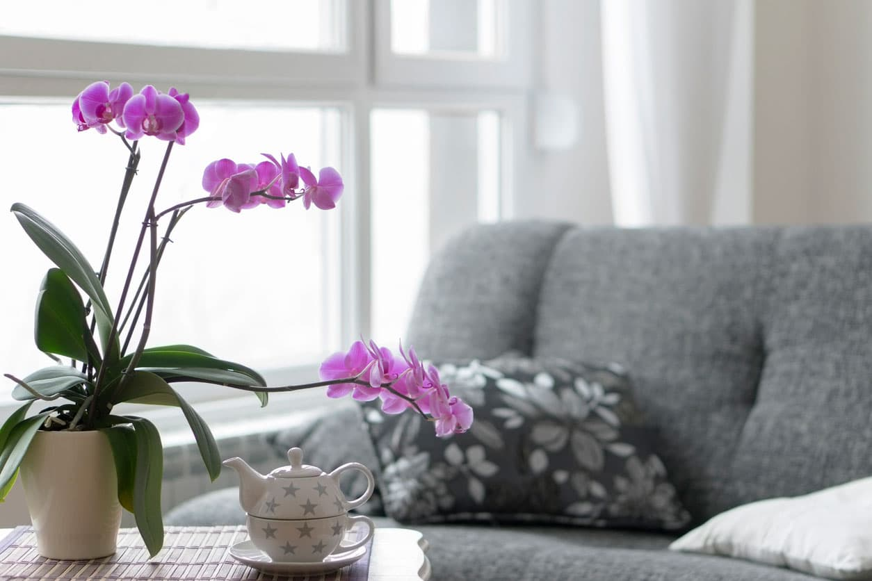 Bien entretenir un orchidee