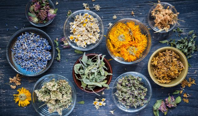 À la découverte des racines médicinales de votre jardin