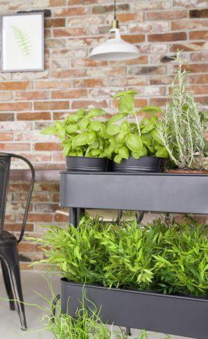 Cultiver des légumes à l'intérieur l'hiver grâce à l'éclairage artificiel