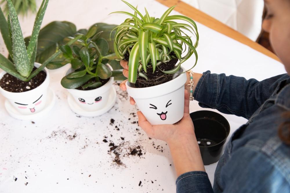 Idee cadeau vegetal etape 6