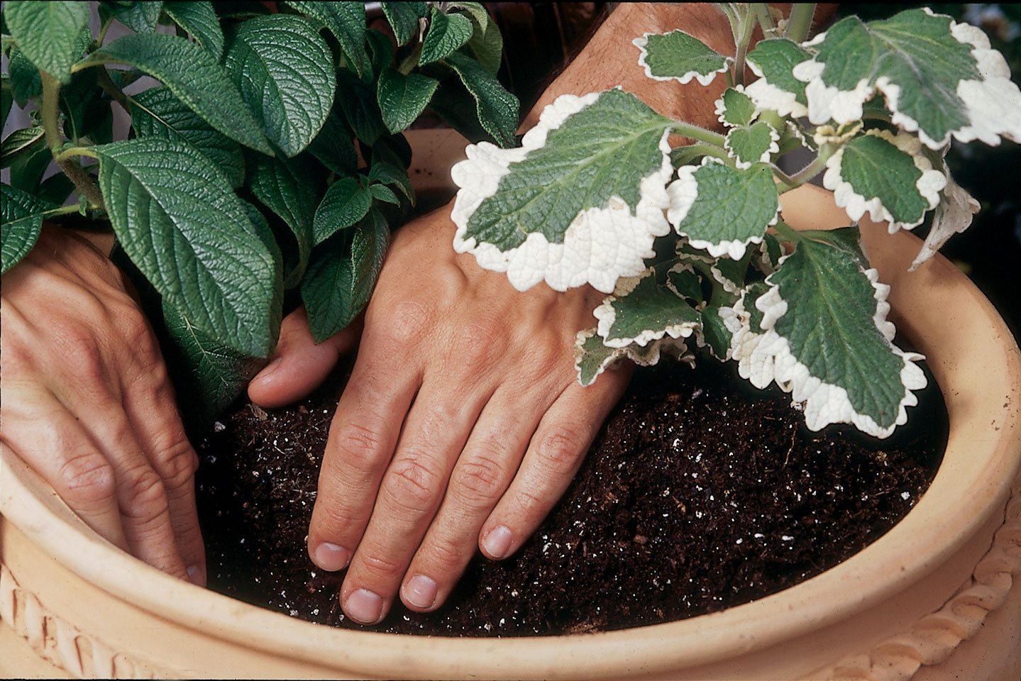 planter culture en pot