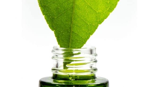 Meilleures plantes aromatiques à faire pousser dans son jardin