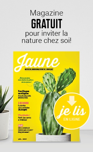 Magazine Jaune