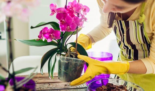 Plantes d'intérieur : comment contrôler les mouches du terreau