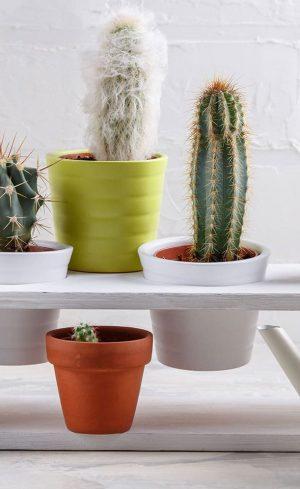Plantes rares et inusitées à collectionner