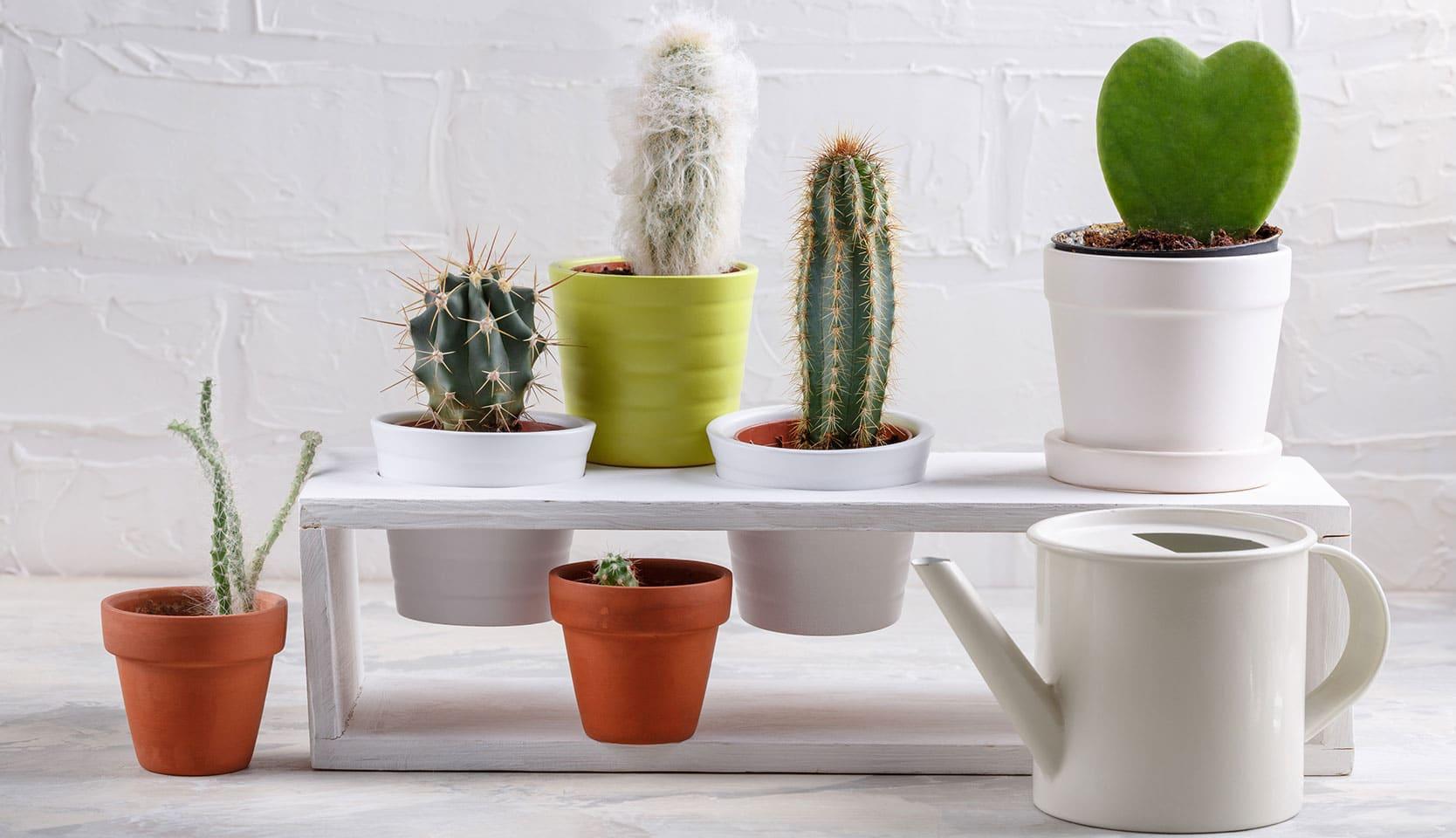 Plantes rares à collectionner