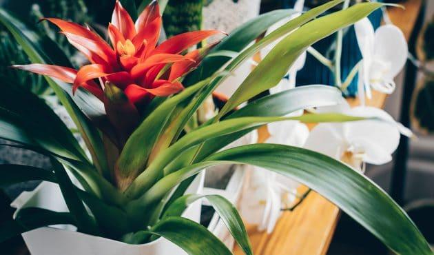 Plantes tropicales audacieuses et faciles à cultiver