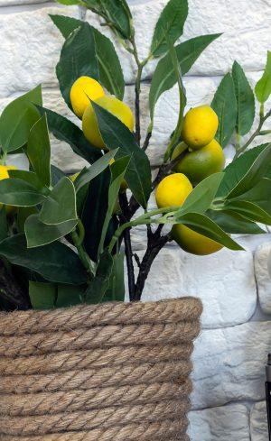 Des arbres fruitiers nains dans votre salon